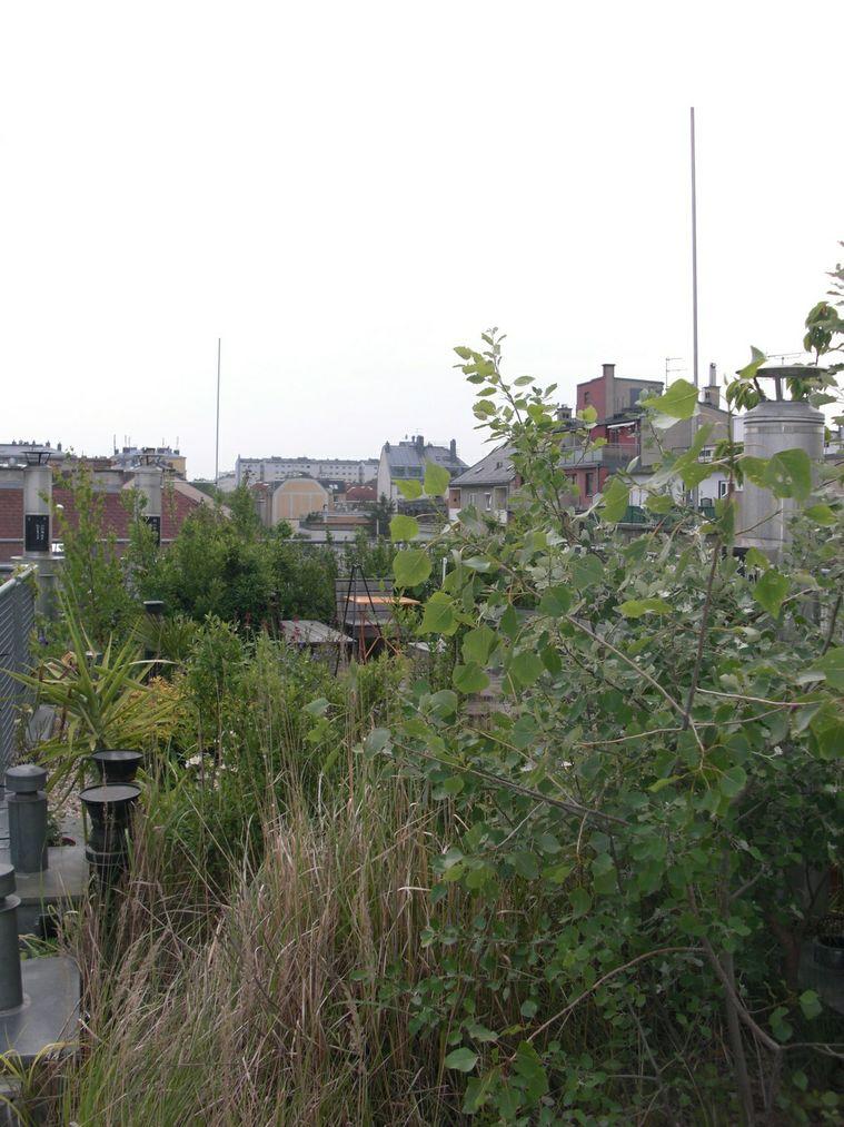 Wohnung mit Dachgarten